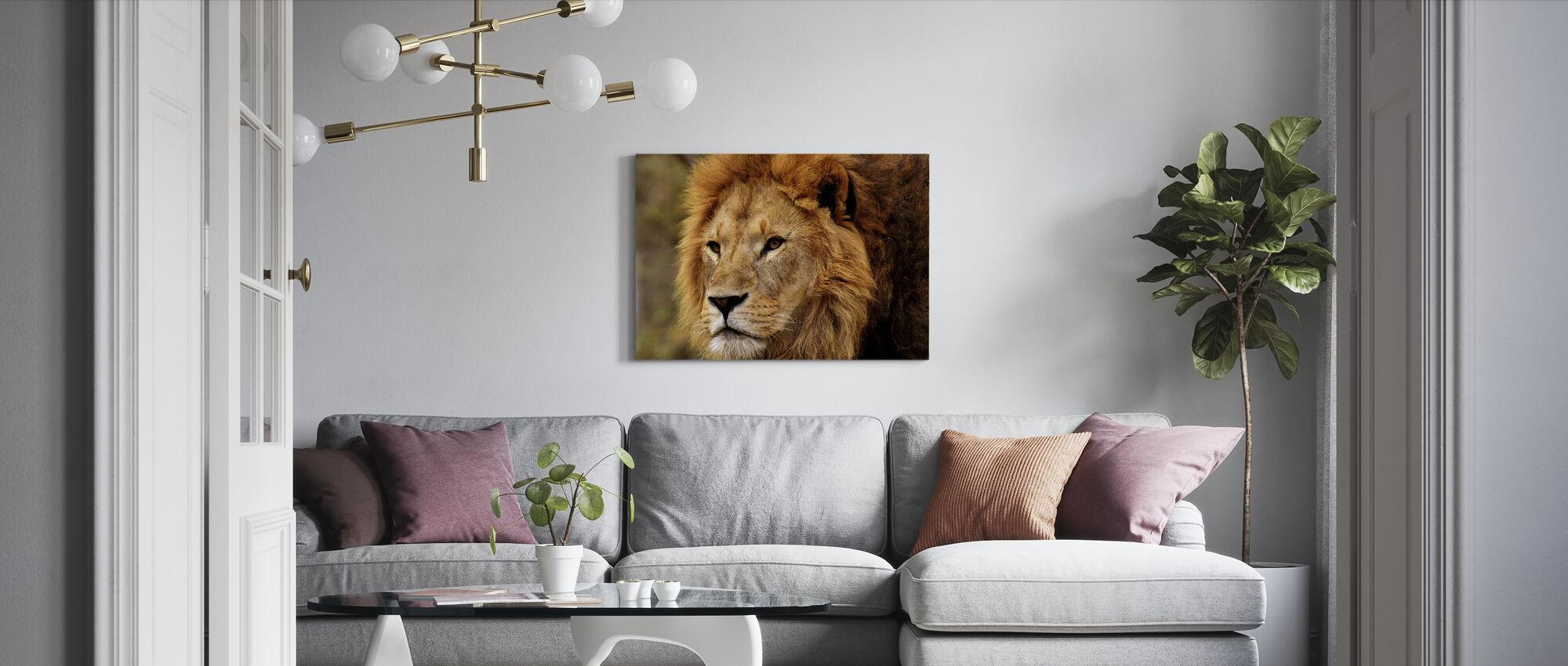 Lion Staring - Canvas print - Living Room