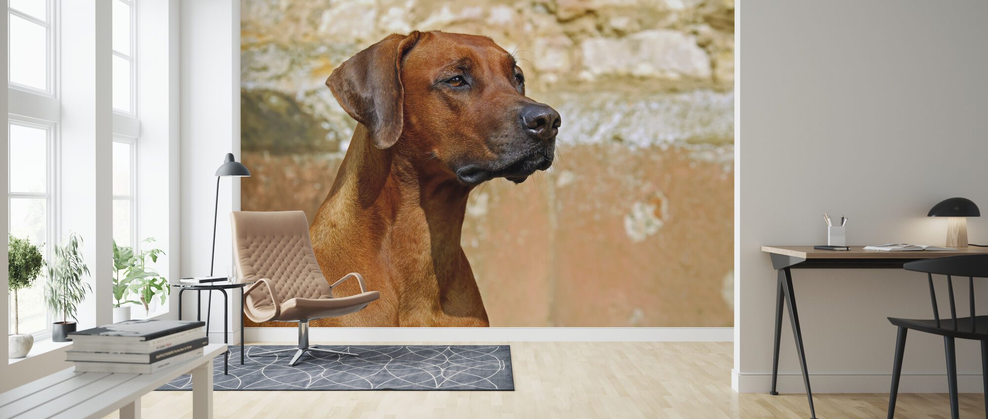 Hunting Dog - Wallpaper - Living Room