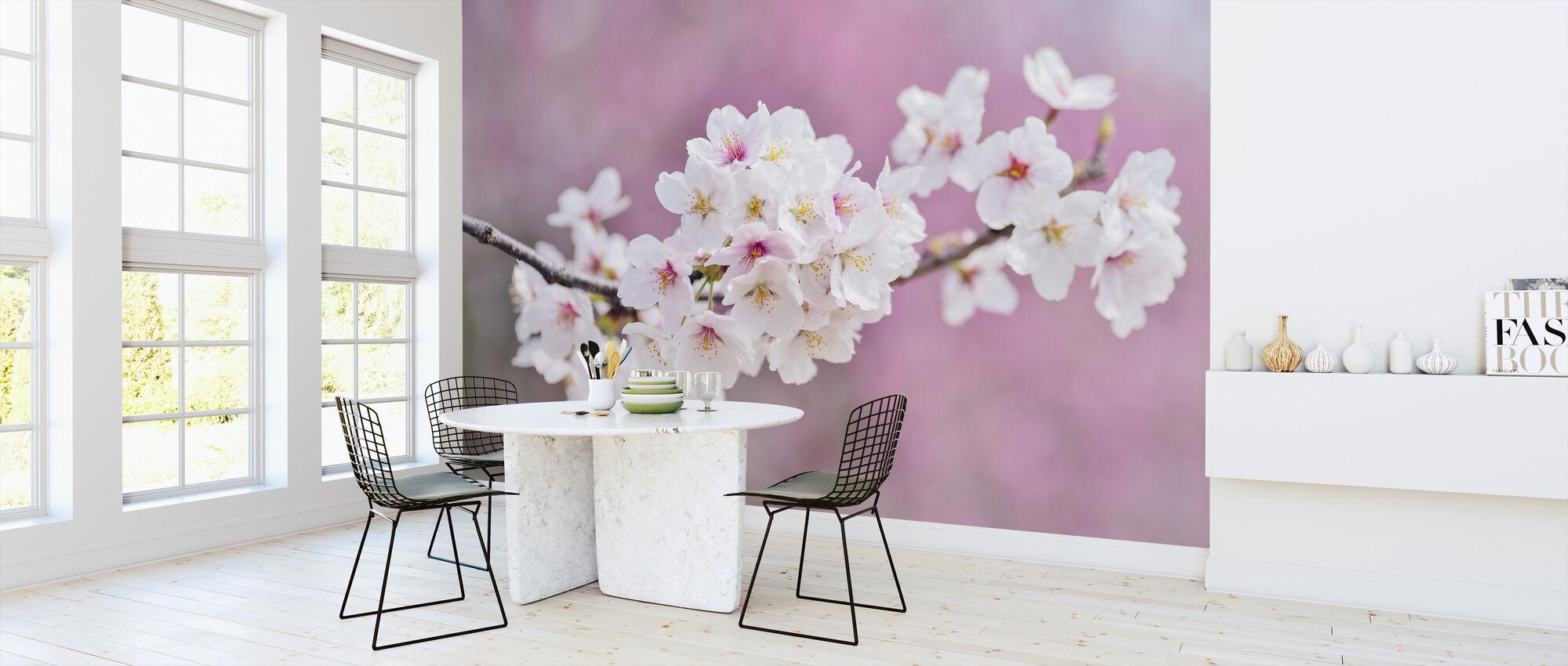 Beautiful Cherry Blossoms - Wallpaper - Kitchen