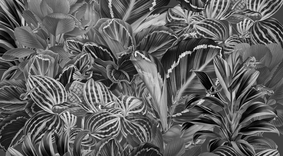 Kuva Birds of Paradise Tapetit / tapetti 100 x 100 cm