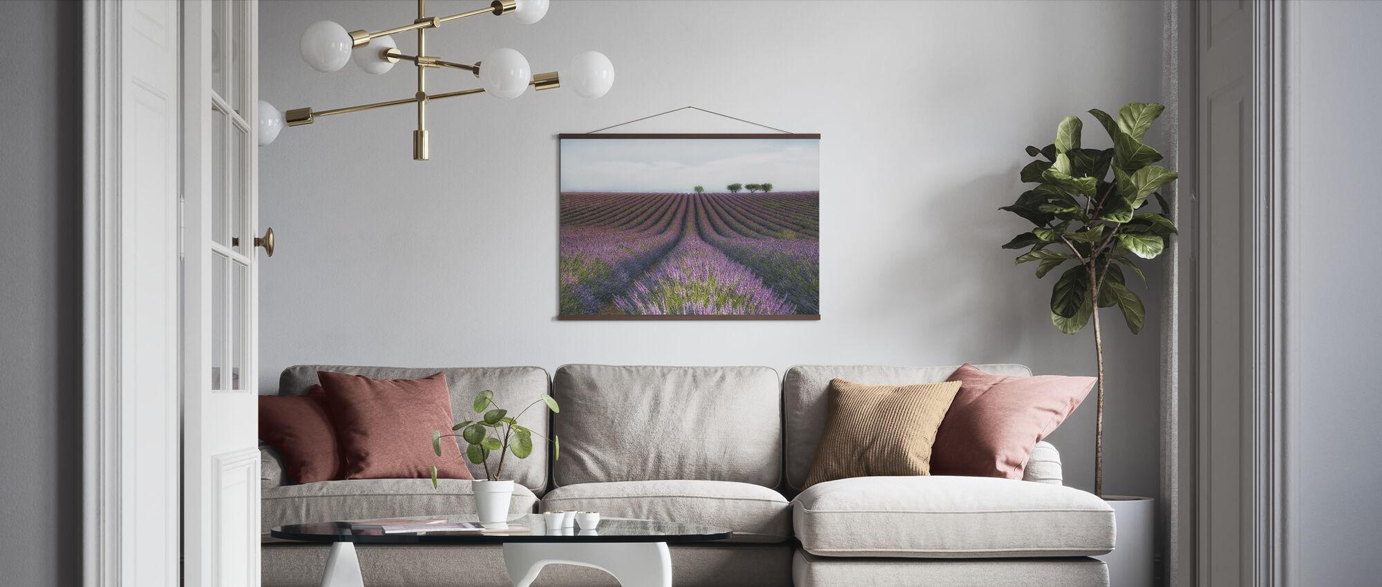 Lavendel sammet - Poster - Vardagsrum