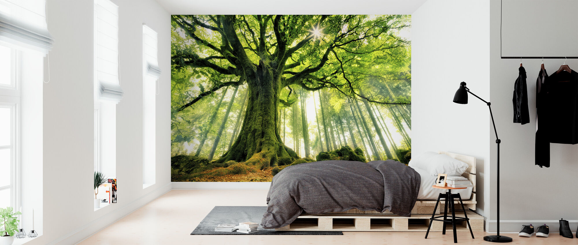 Ponthus' Beech - Wallpaper - Bedroom