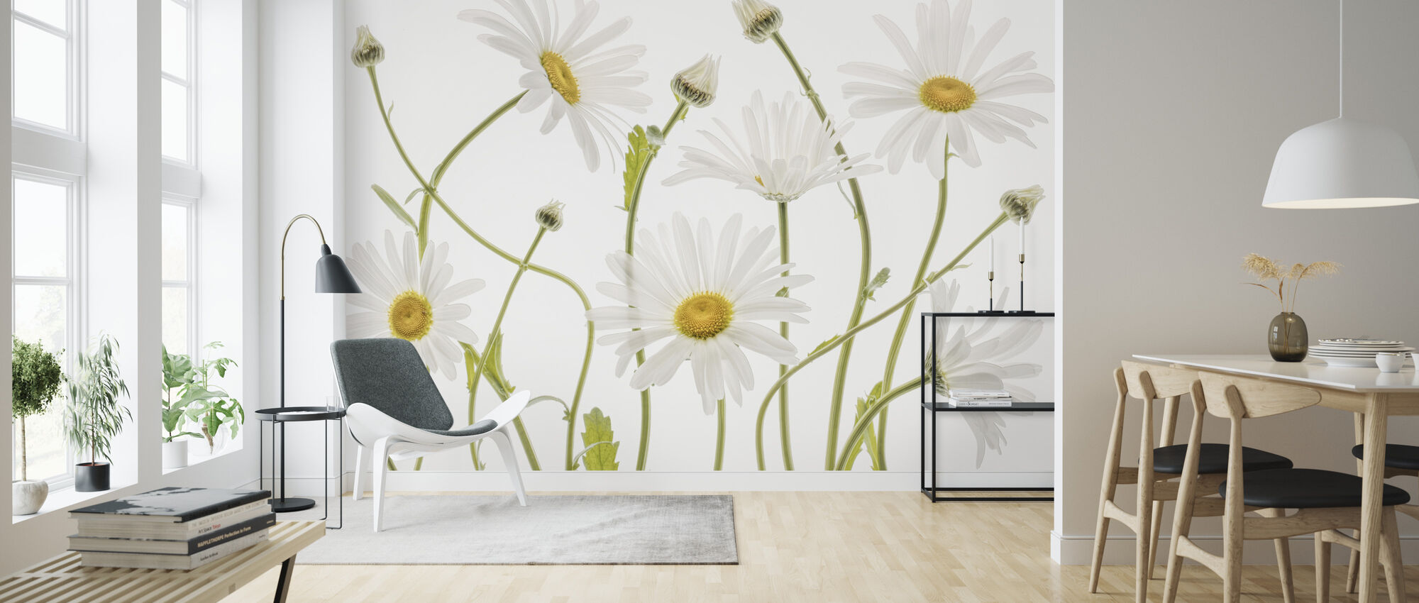 Ox Eye Daisies - Wallpaper - Living Room