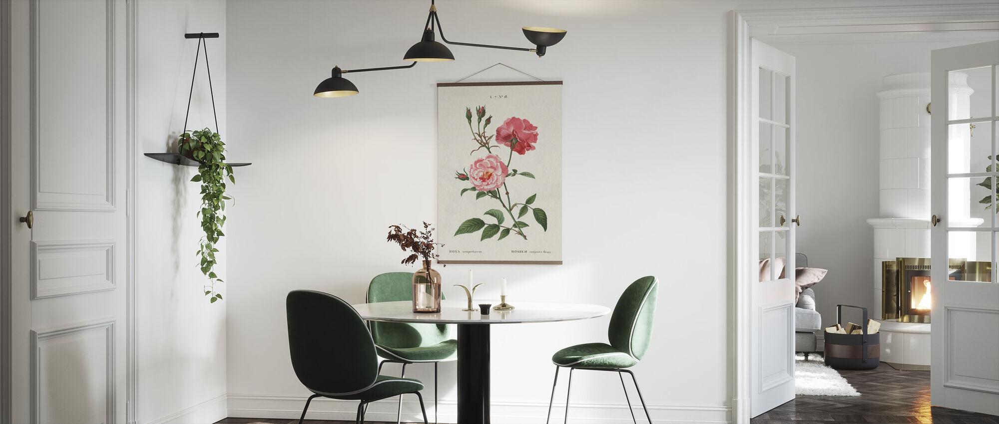 Rosa - Plakat - Køkken
