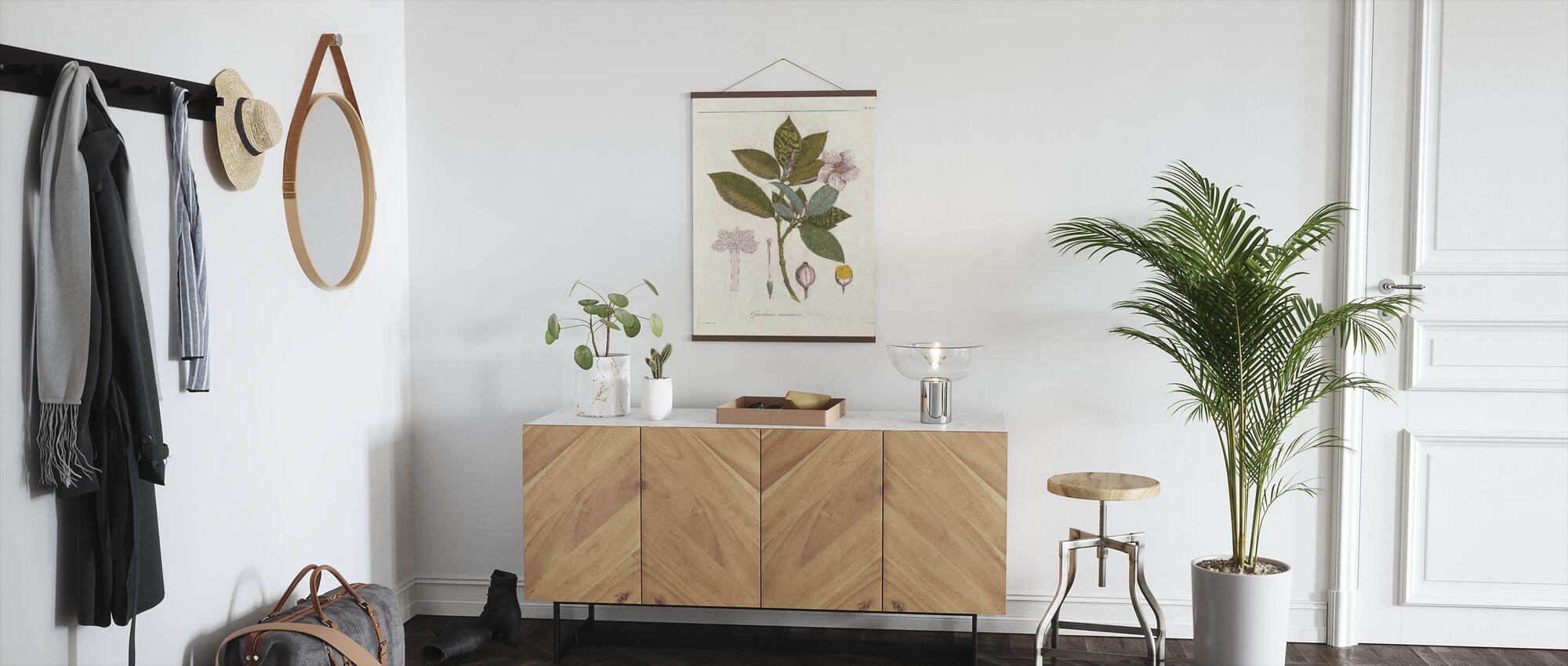 Kasvitieteellinen Gardenia v2 - Juliste - Aula