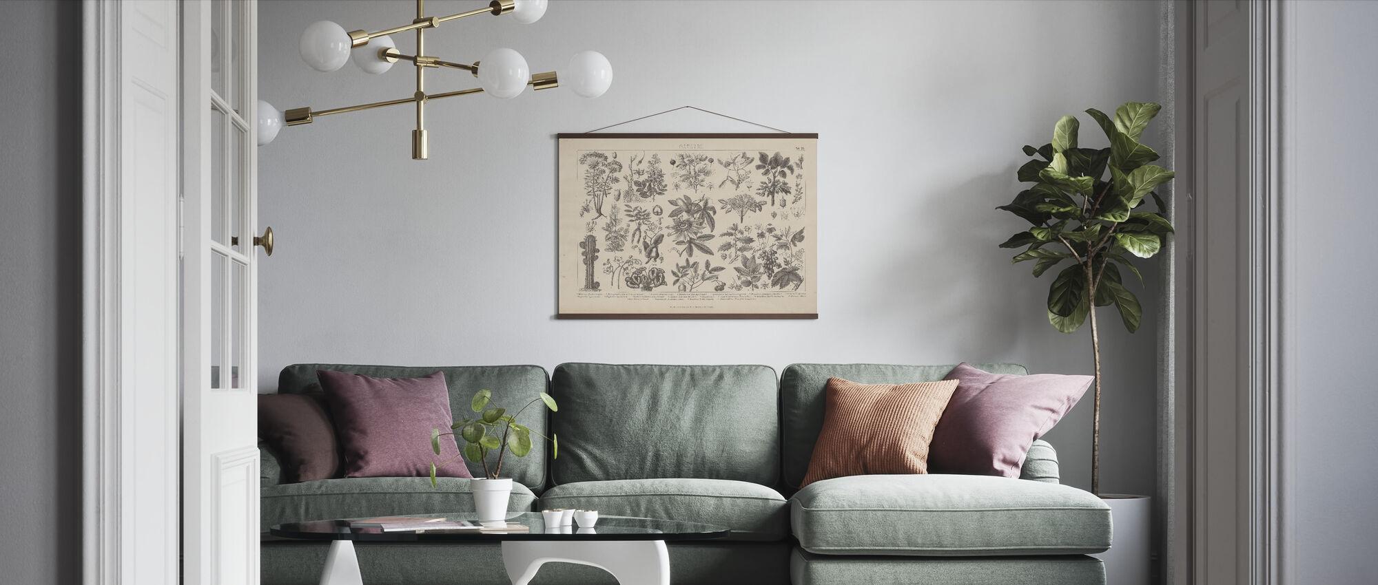 Botany In Vintage - Poster - Living Room
