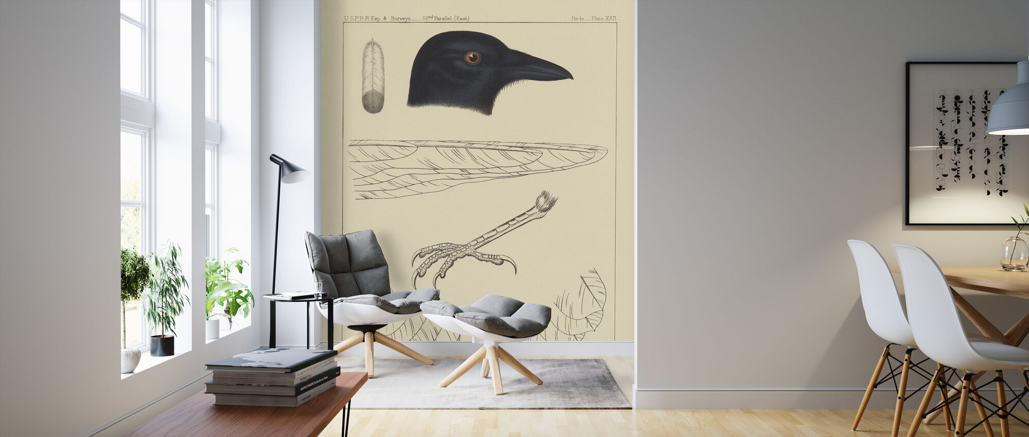Bird Prints I - Wallpaper - Living Room