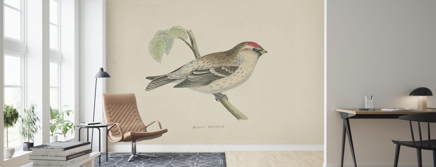 Mealy Redpole Print - Wallpaper - Living Room