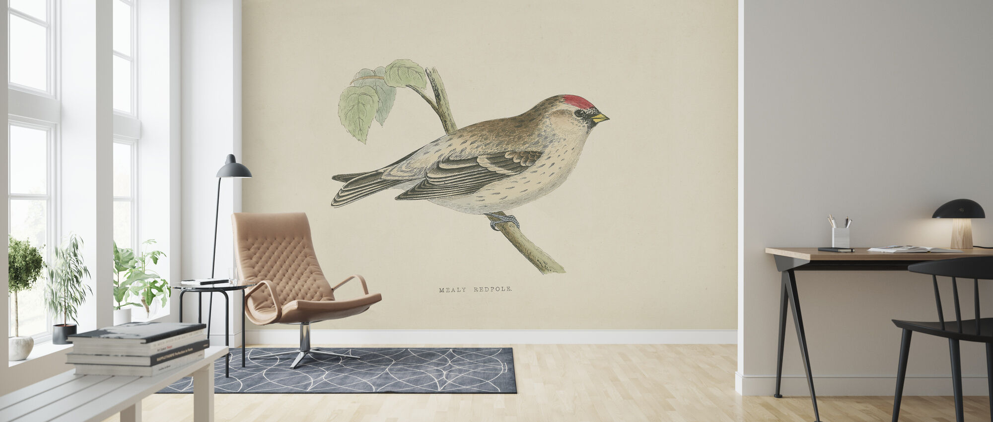 Mealy Redpole Print - Wallpaper - Living Room
