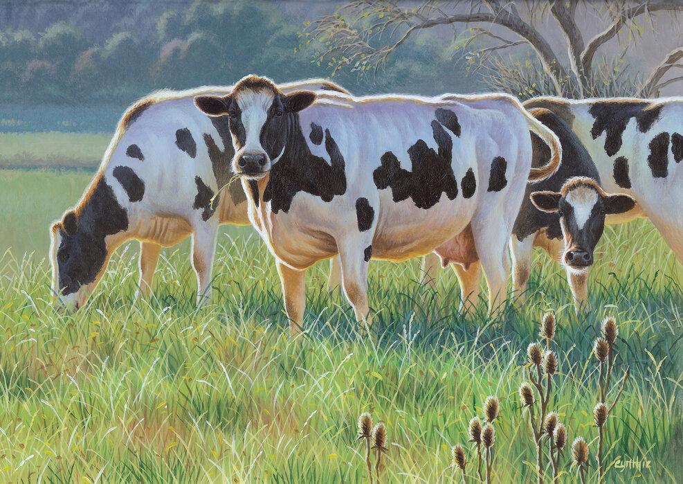 Cows Affordable Wall Mural Photowall