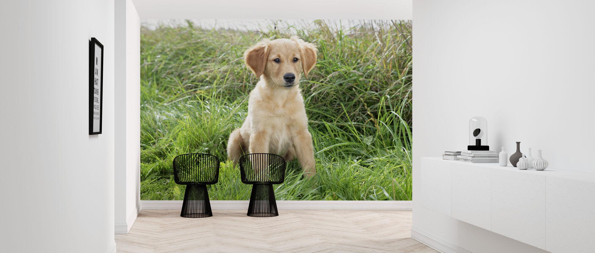 Golden Retriever Puppy in Meadow - Wallpaper - Hallway