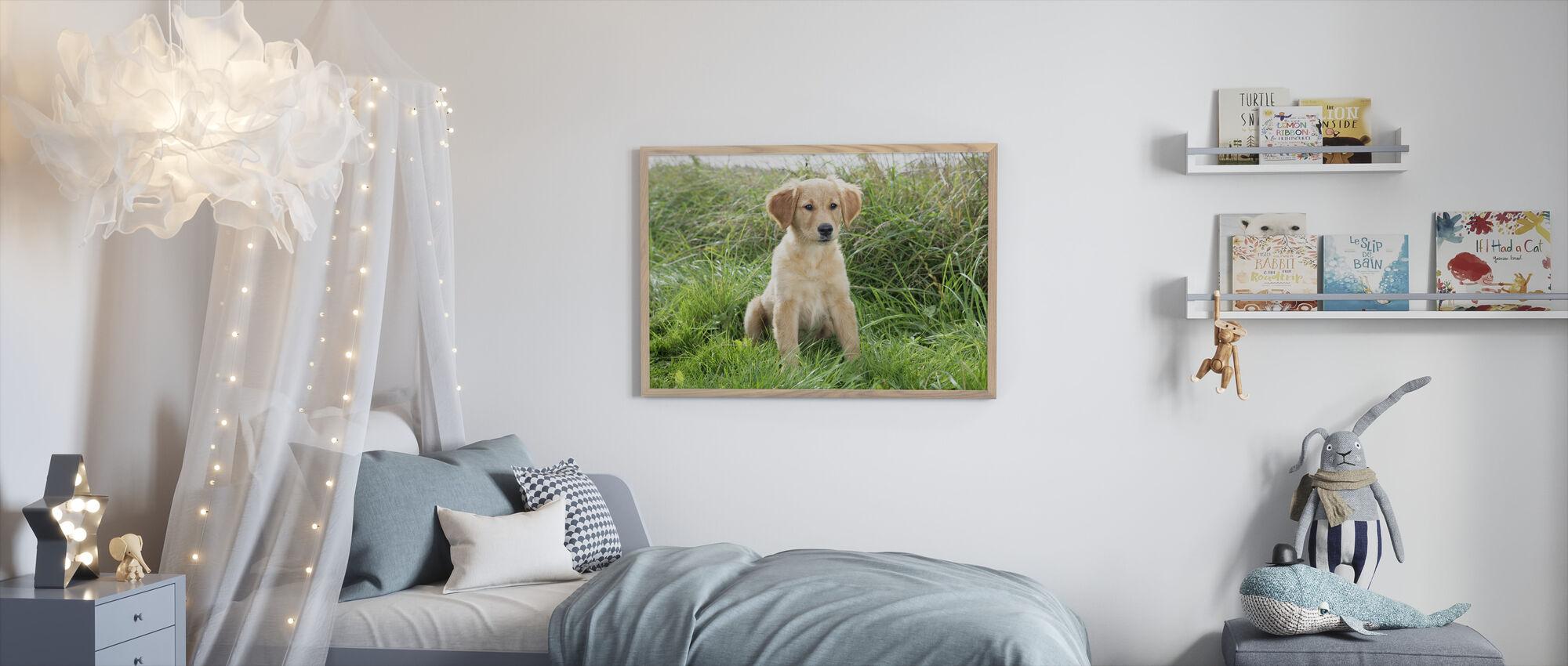 Golden Retriever valp i eng - Innrammet bilde - Barnerom