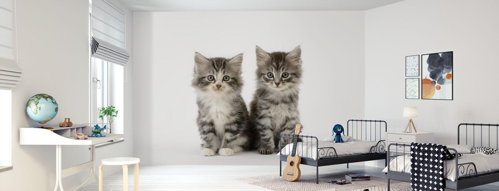 Koty białe tło - Tapeta - Pokój dziecięcy