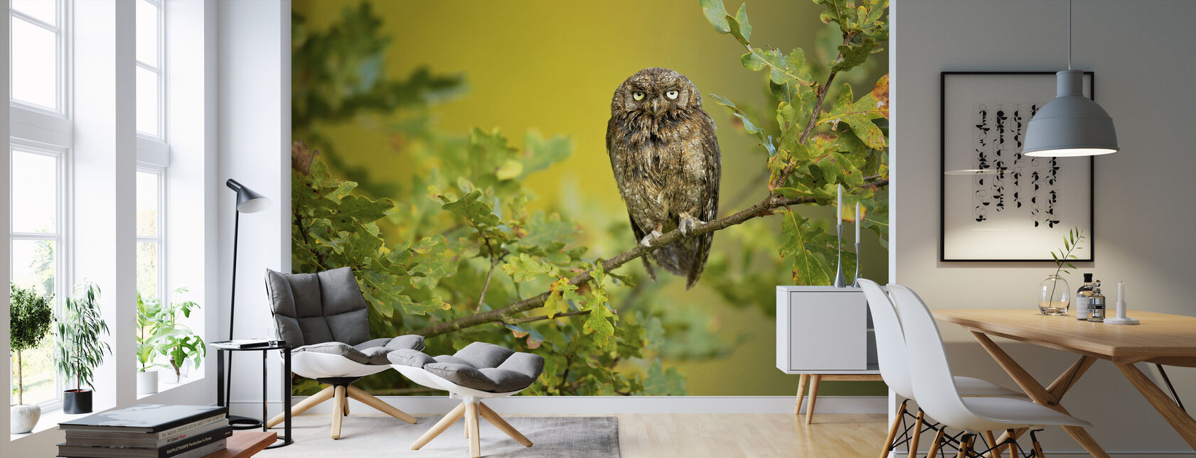 Eurasian Scops Owl - Wallpaper - Living Room