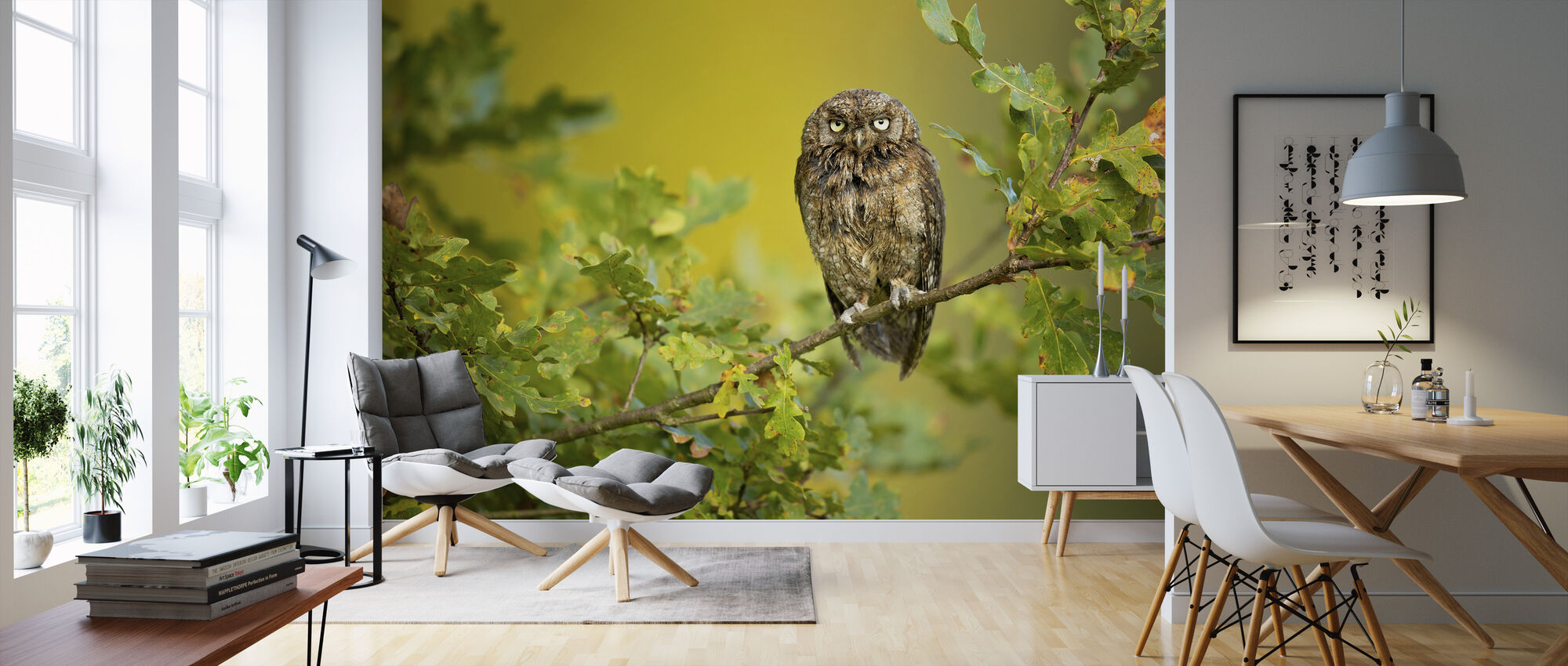 Eurasian Scops Owl - Wallpaper - Living Room