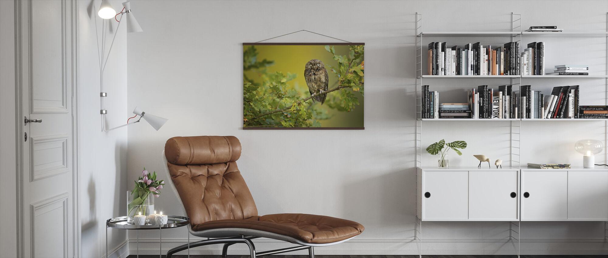 Eurasian Scops Owl - Poster - Living Room