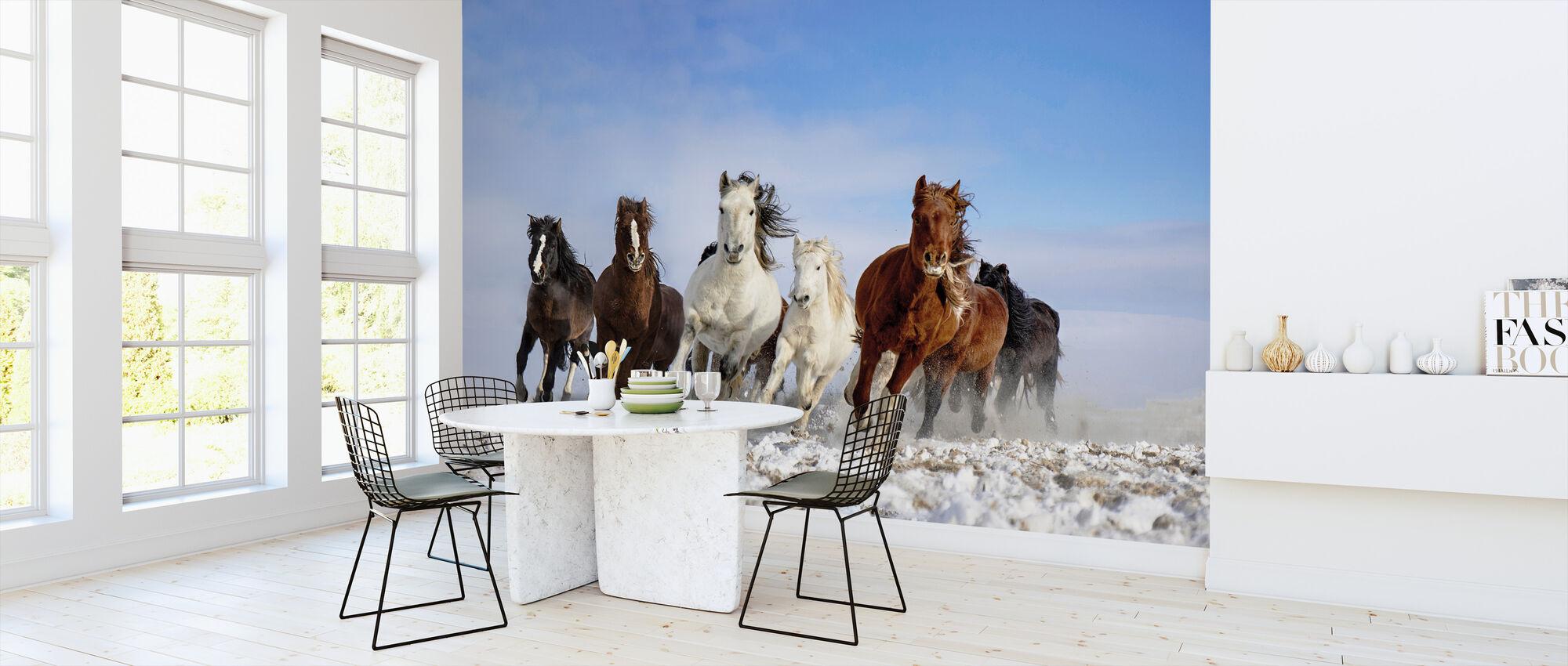 Mongolia Horses - Wallpaper - Kitchen