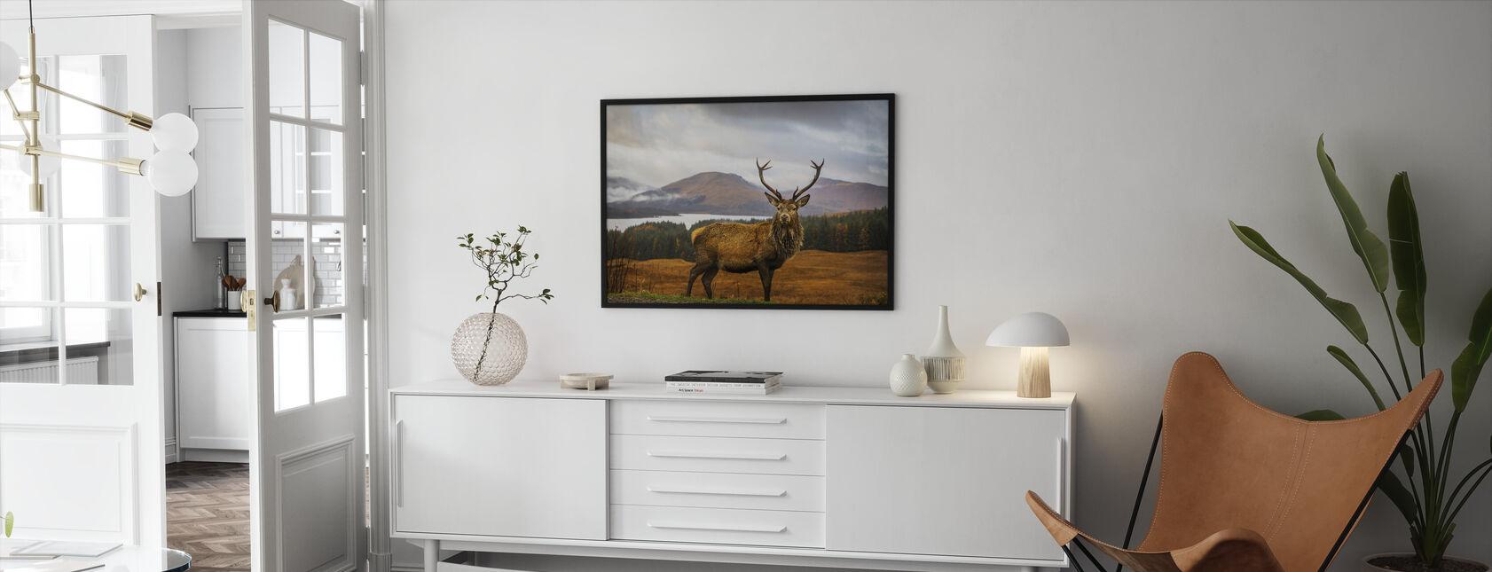 Skotsk hjort - Innrammet bilde - Stue