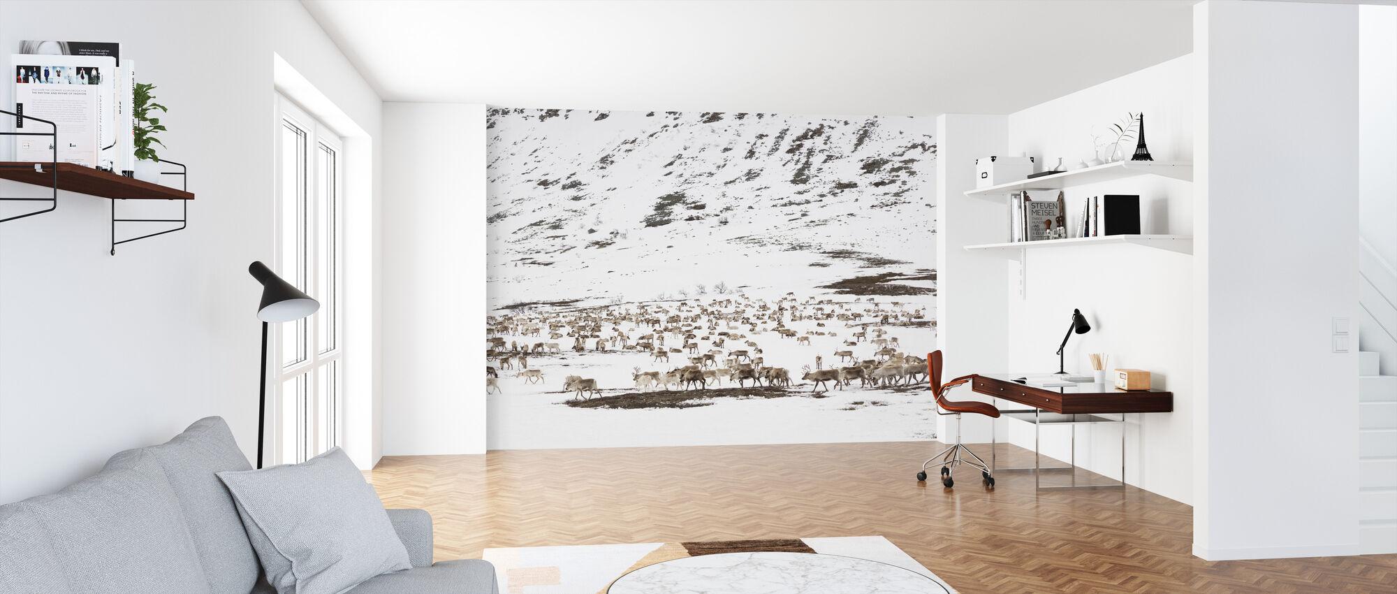 Renar i vinterlandskapet - Tapet - Kontor