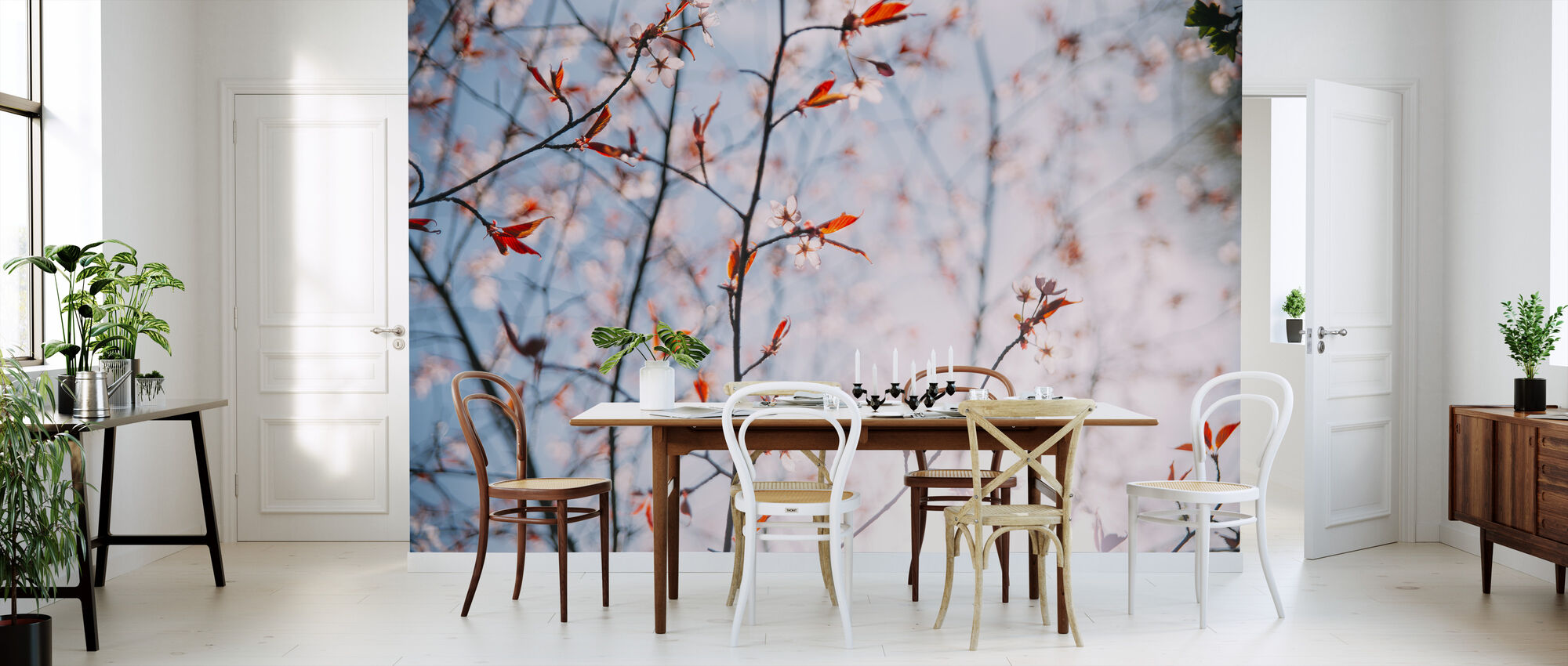 Cherry Blossoms in Spring - Wallpaper - Kitchen