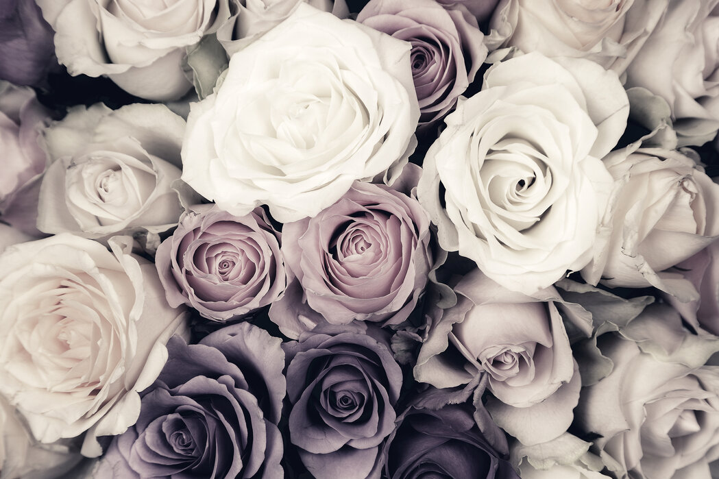 Dark Roses Popular Wall Mural Photowall
