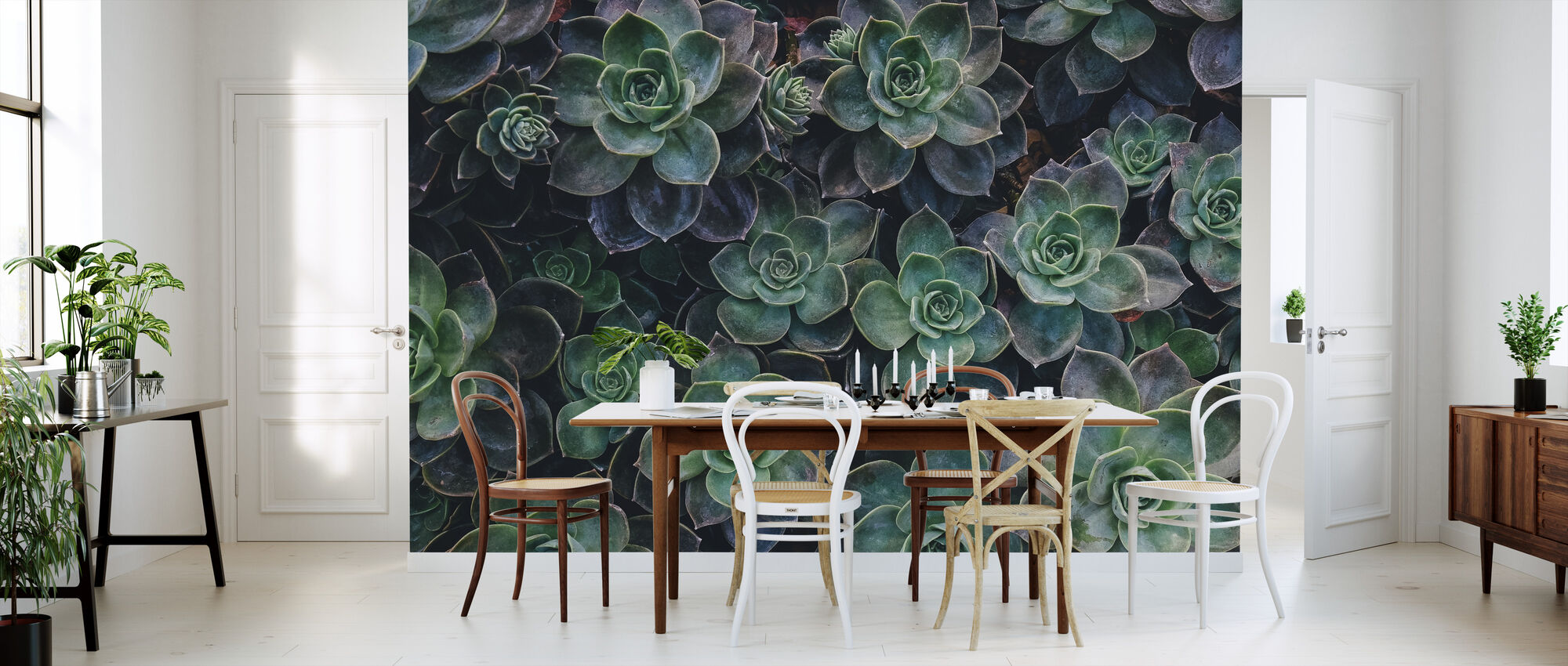 Succulent Joy - Wallpaper - Kitchen