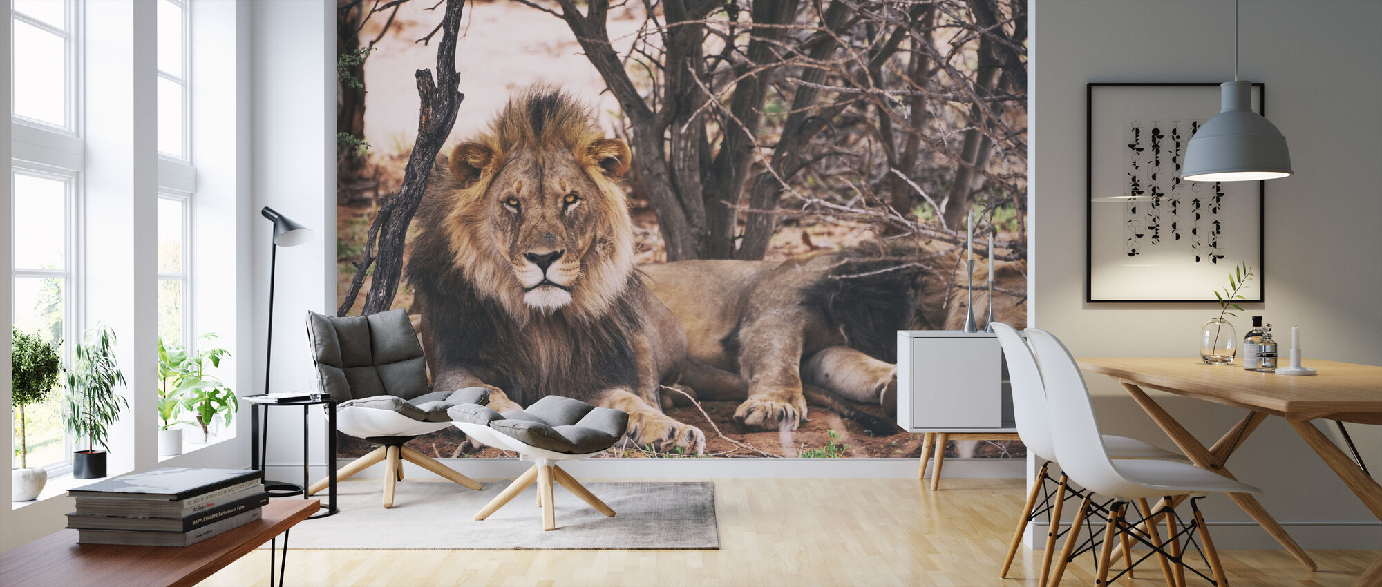 Lions under ett träd - Tapet - Vardagsrum