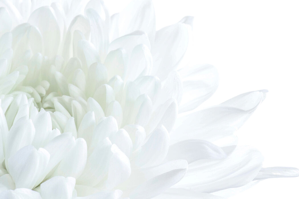 White Flower Blossom - Canvas print