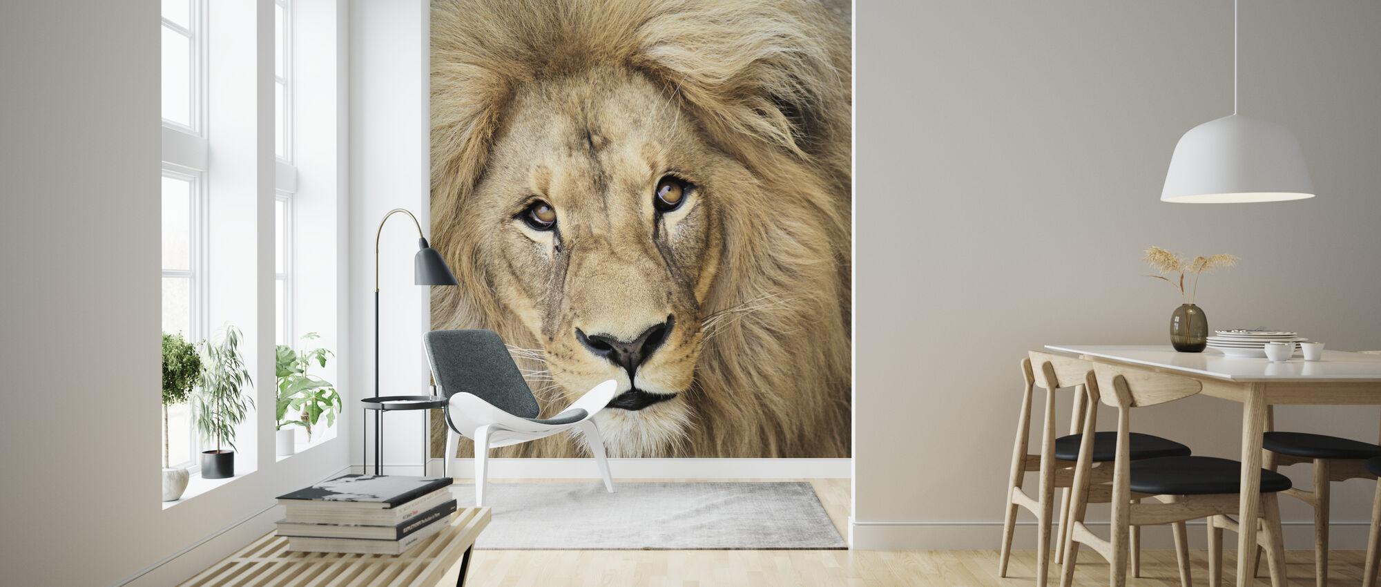 Lions Face - Wallpaper - Living Room