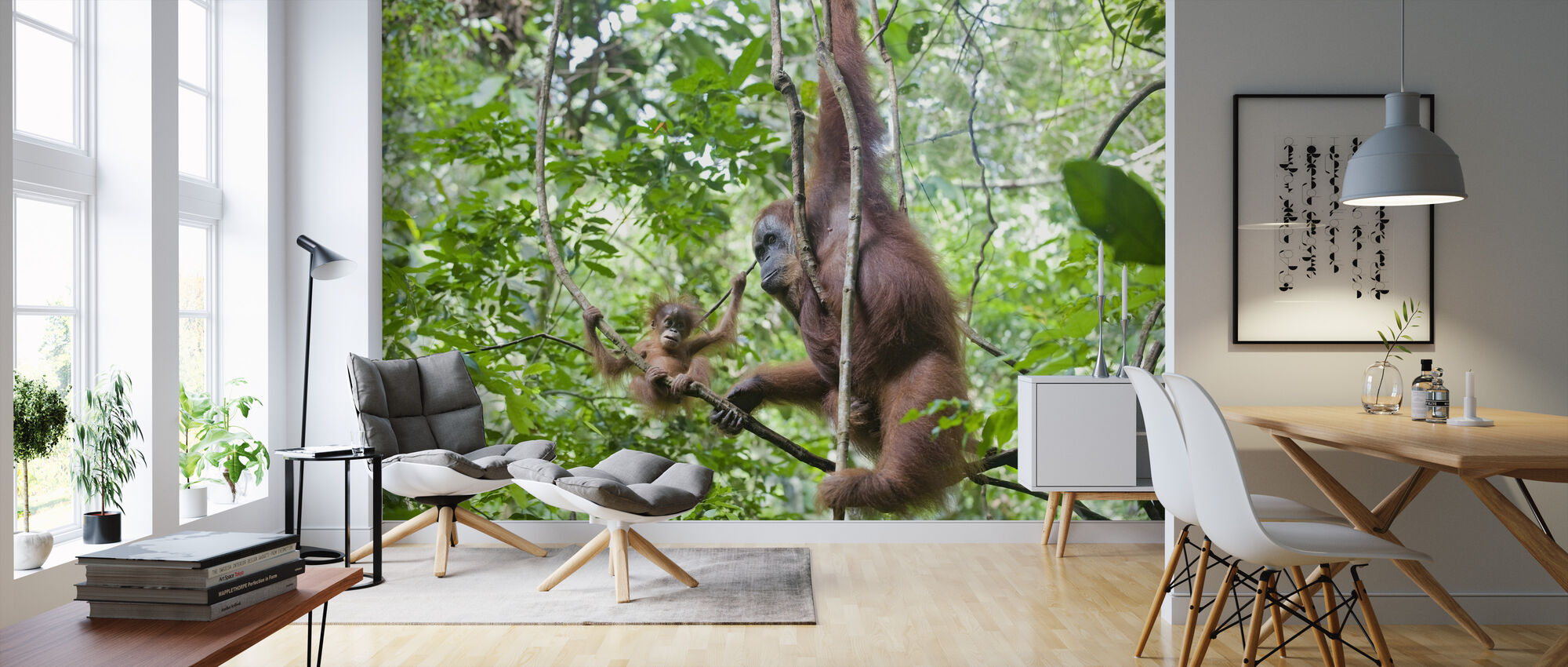 Mother and Baby Orangutan - Wallpaper - Living Room