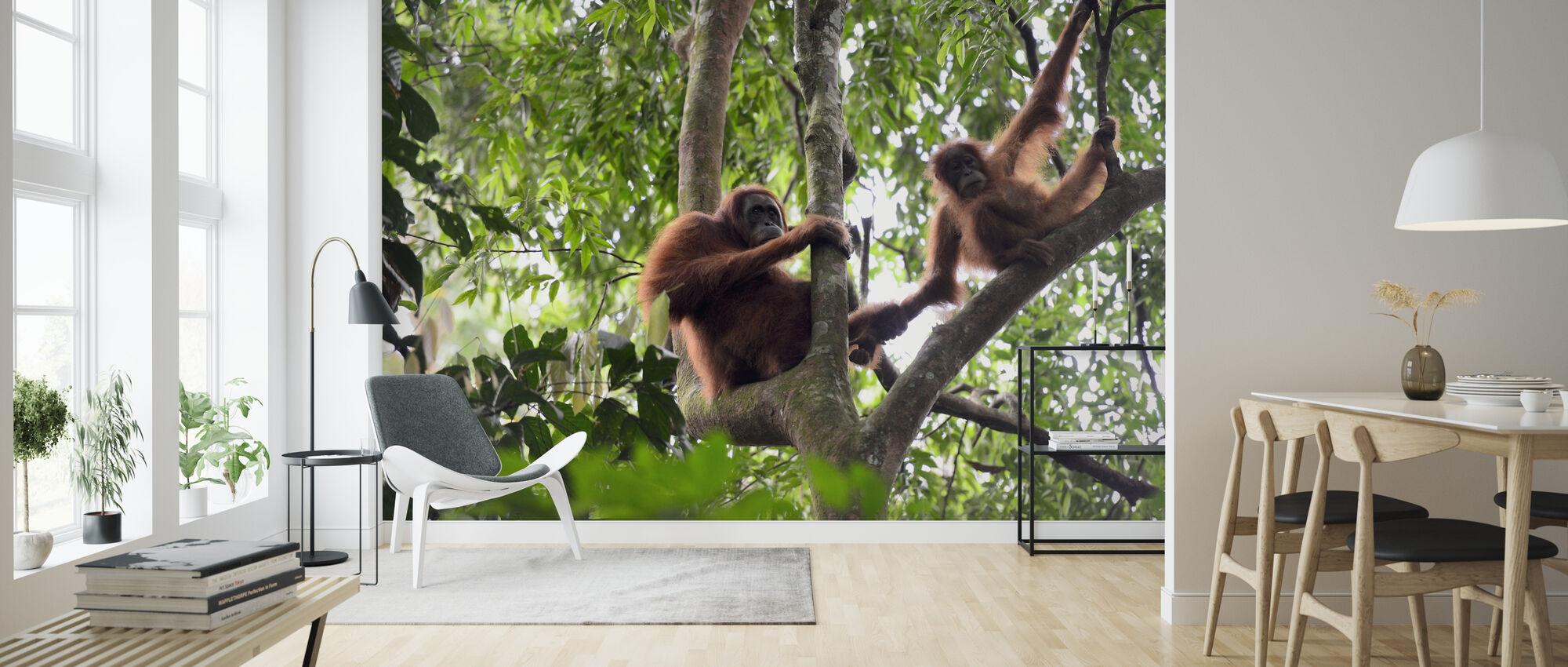 Female and Infant Orangutan - Wallpaper - Living Room