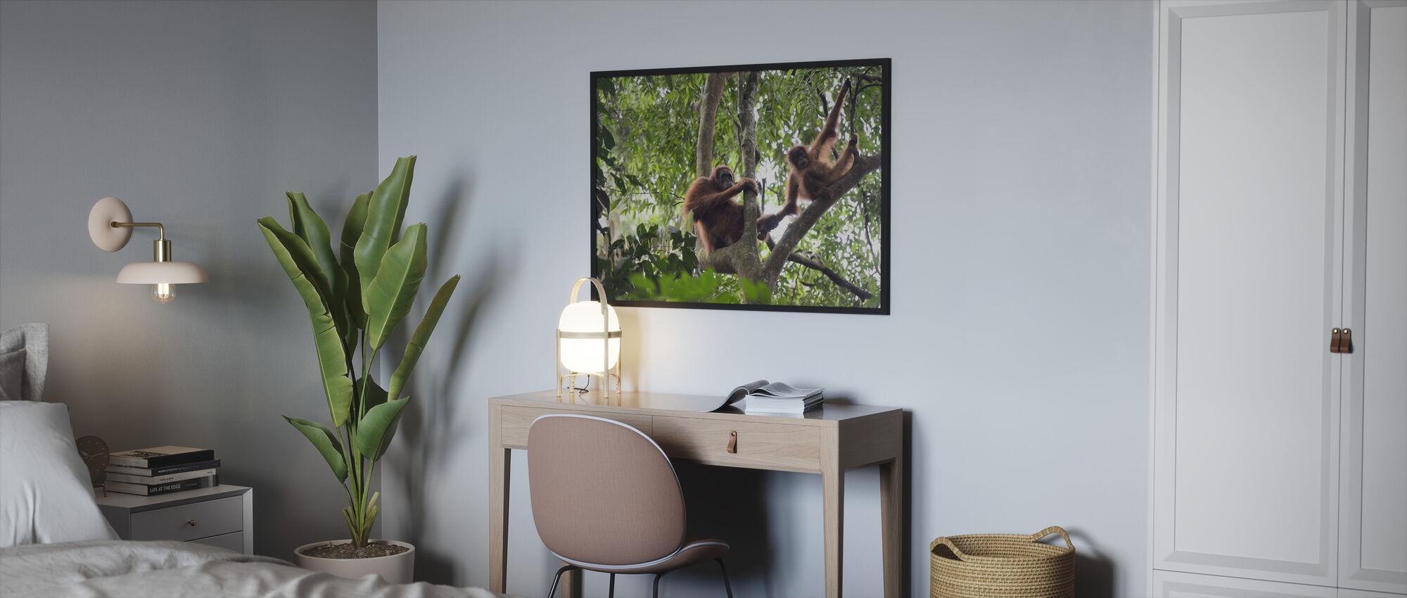 Female and Infant Orangutan - Framed print - Bedroom