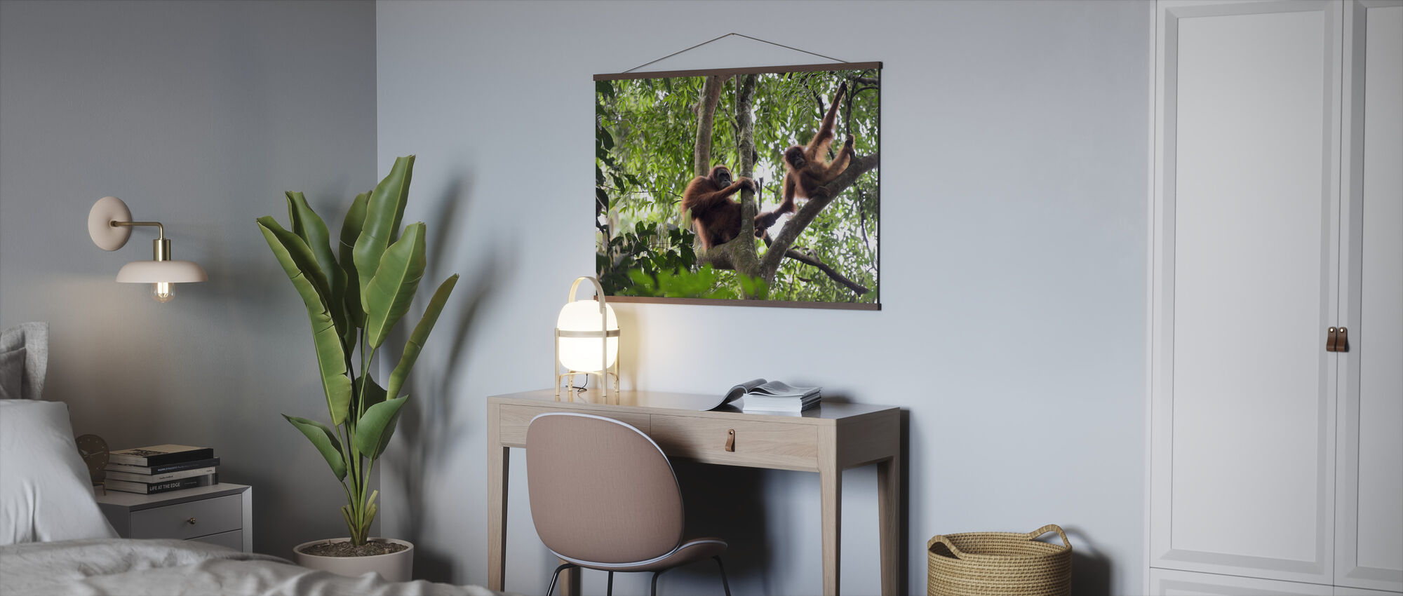 Female and Infant Orangutan - Poster - Office