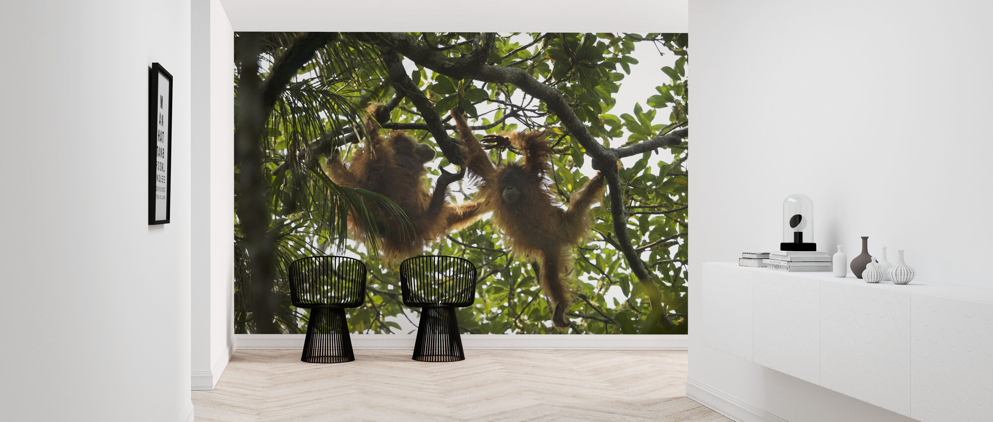 Tapanuli Orangutan - Wallpaper - Hallway