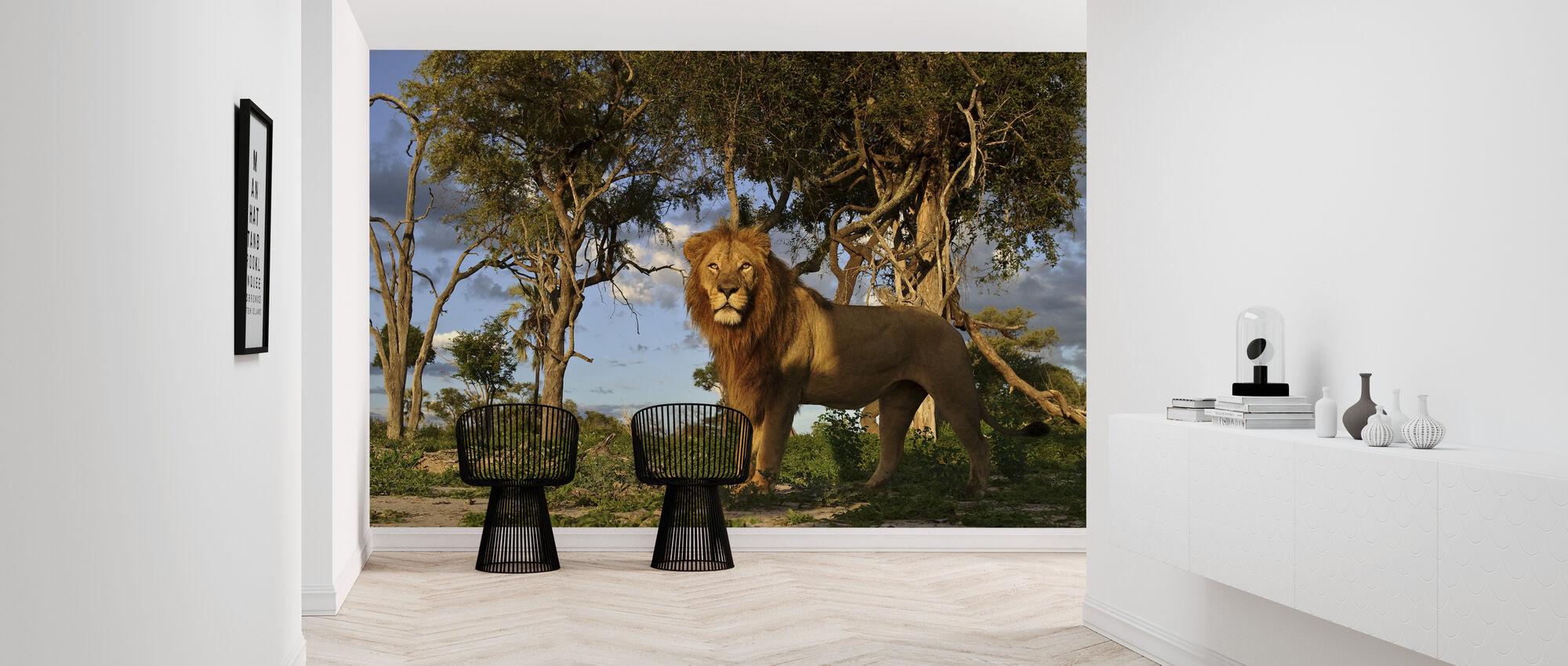 Afrikkalainen leijona - Tapetti - Aula