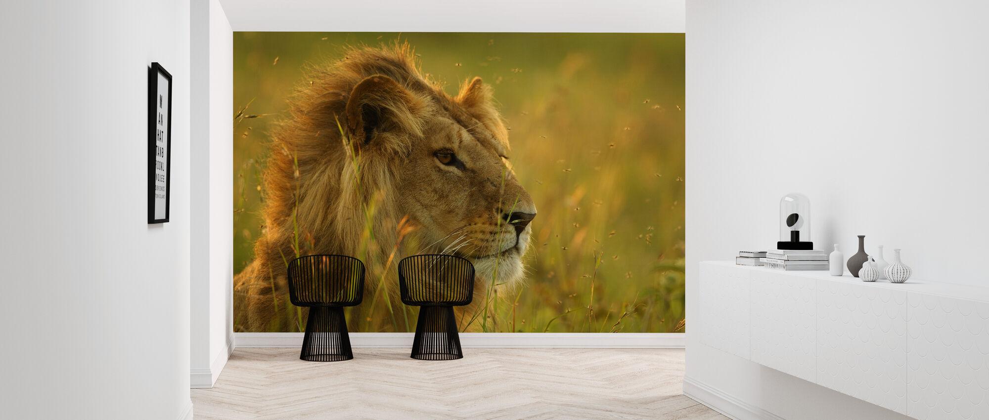 Resting Lion - Wallpaper - Hallway