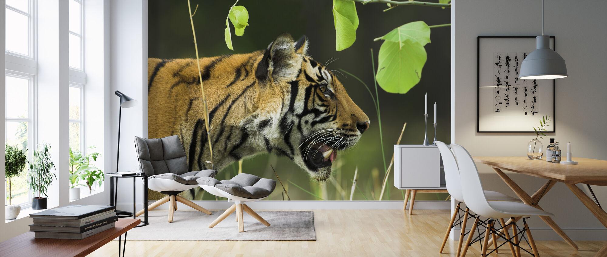 Male Bengal Tiger - Wallpaper - Living Room