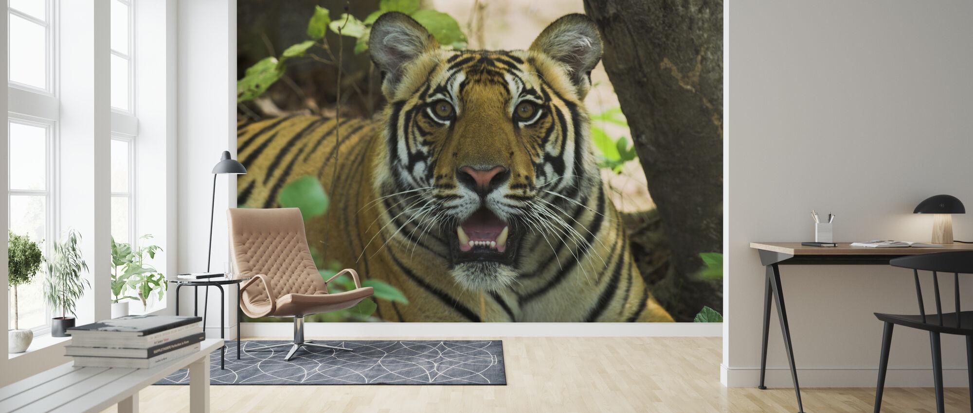 Male Bengal Tiger II - Wallpaper - Living Room