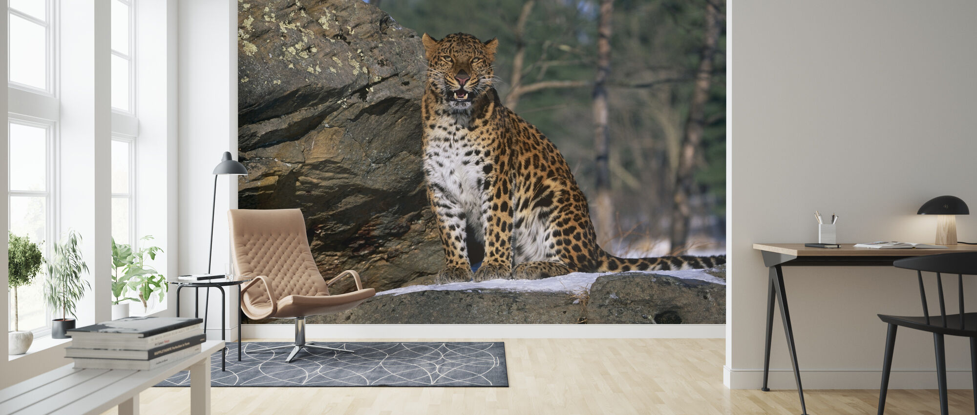 Sitting Leopard - Wallpaper - Living Room