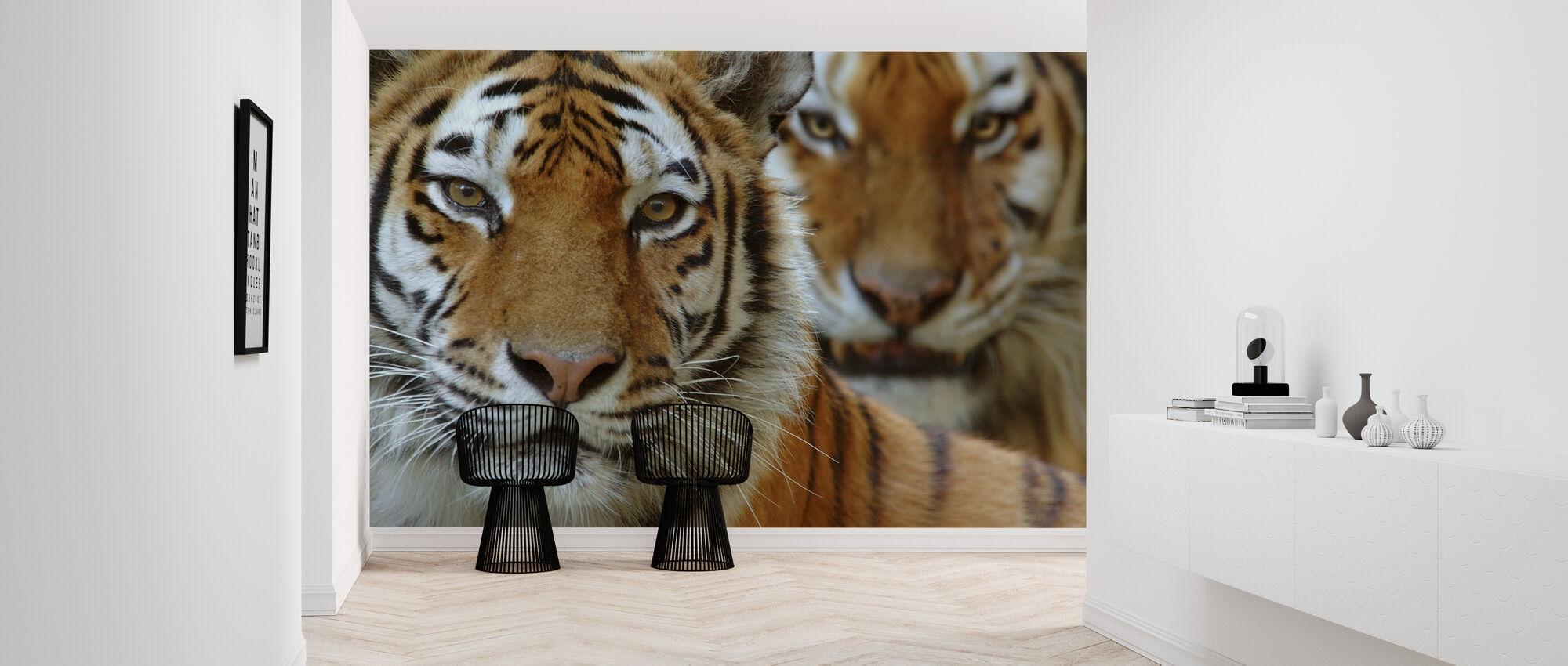 Two Siberian Tigers - Wallpaper - Hallway