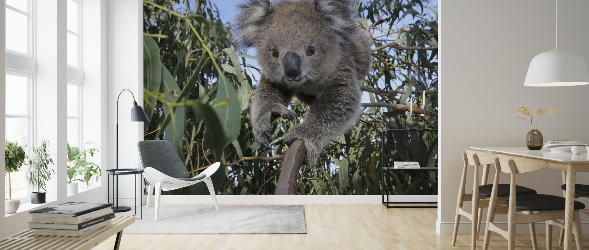 Koala - Wallpaper - Living Room