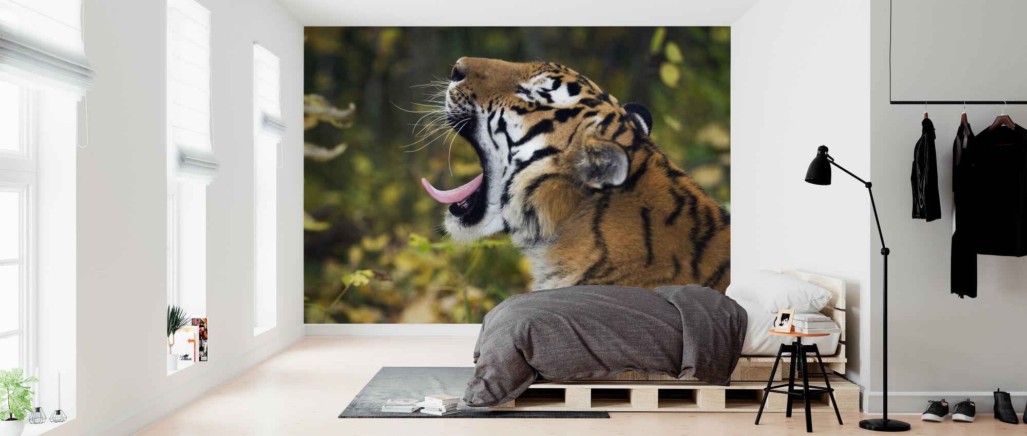 Yawning Siberian Tiger - Wallpaper - Bedroom