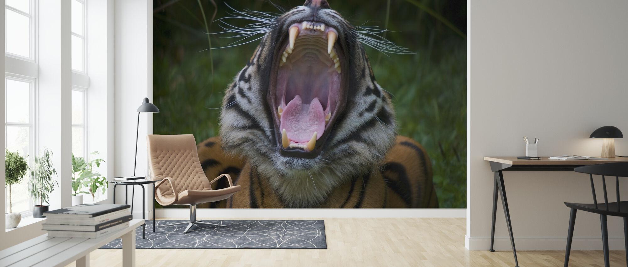 Yawning Tiger - Wallpaper - Living Room