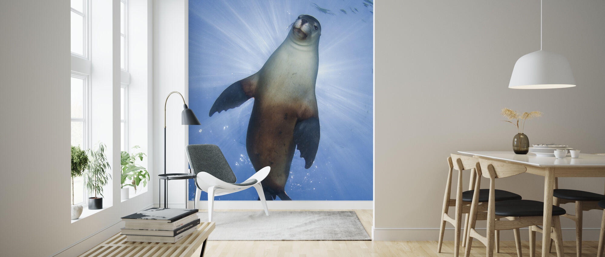 Australian Sea Lion - Wallpaper - Living Room