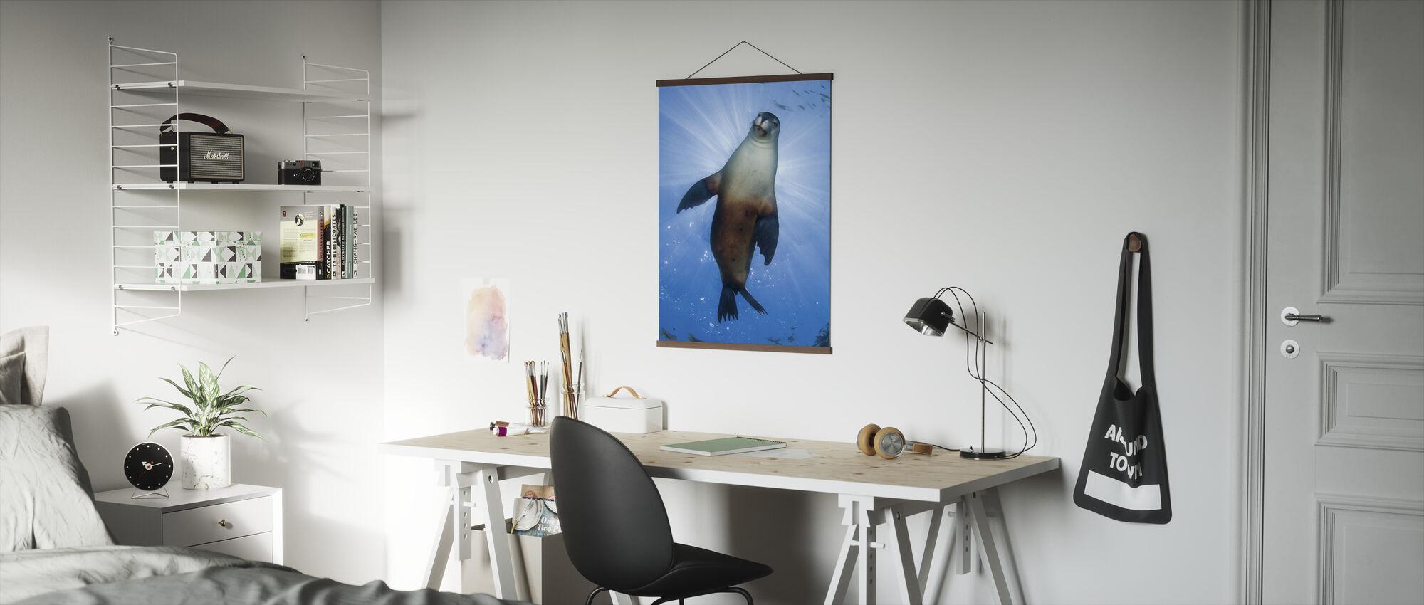 Australische zeeleeuw - Poster - Kantoor