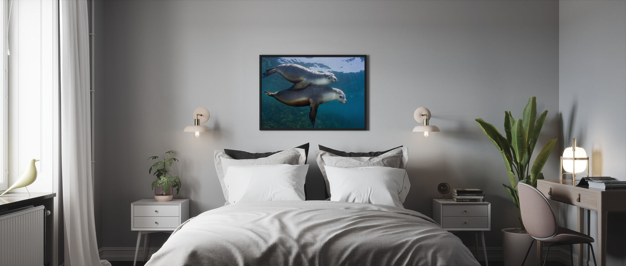 Pair of Sea Lions - Framed print - Bedroom
