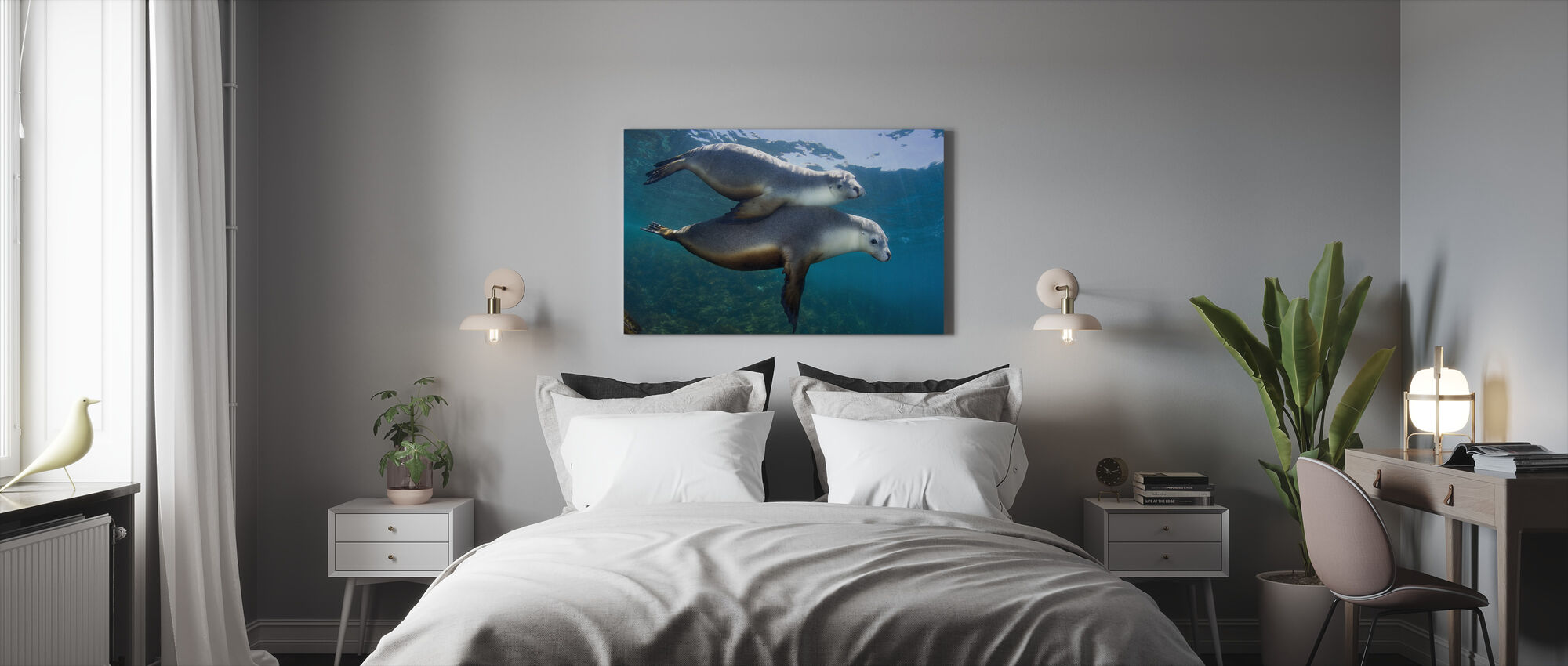 Pair of Sea Lions - Canvas print - Bedroom