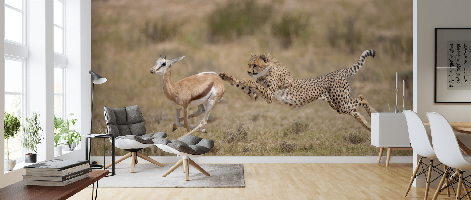 Cheetah Chasing Springbok - Wallpaper - Living Room