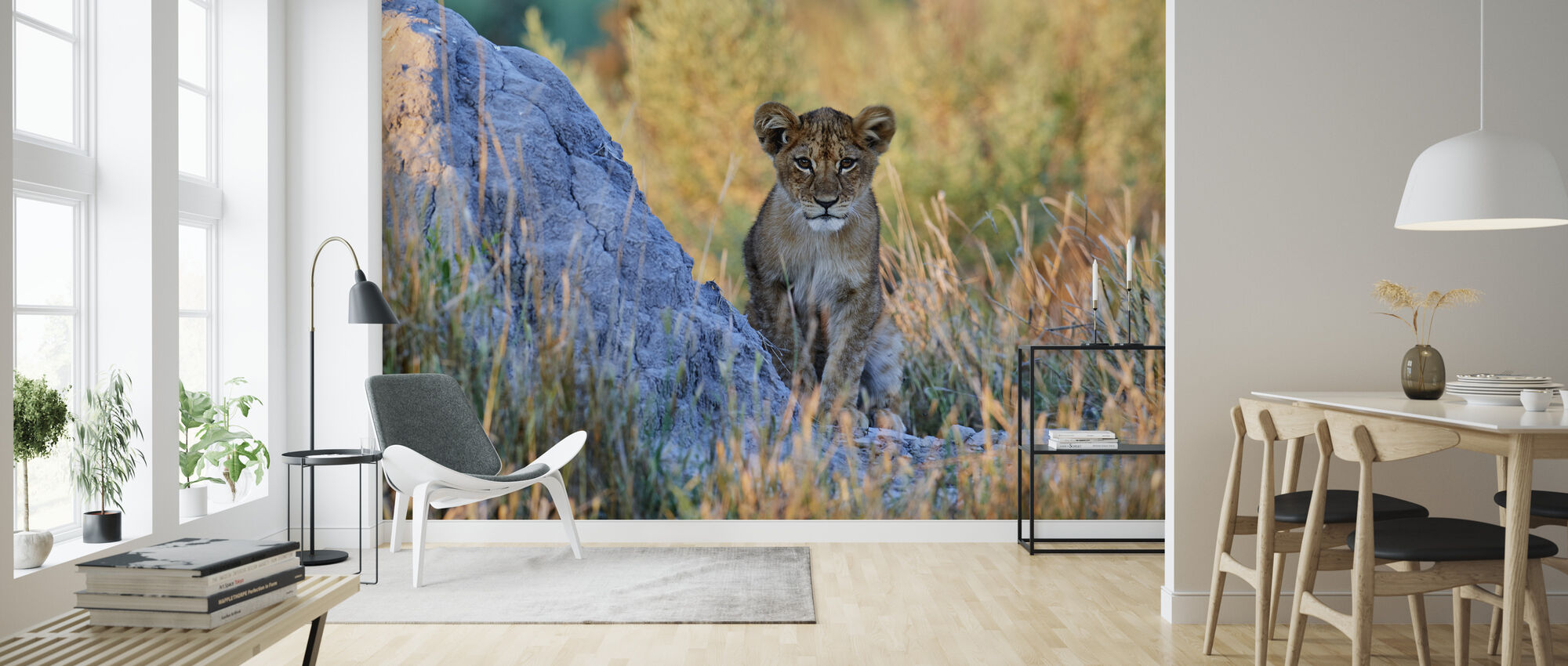 African Lion Cub - Wallpaper - Living Room