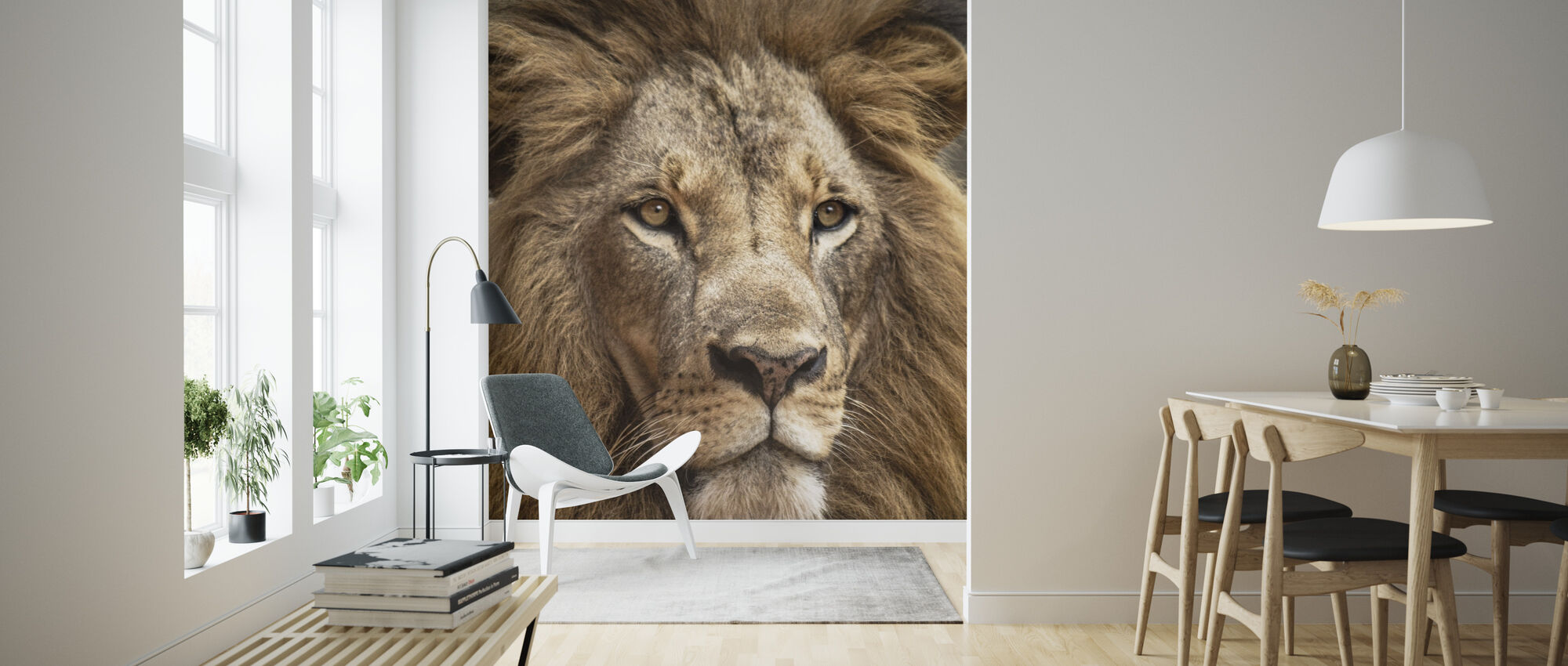Stunning Lion - Wallpaper - Living Room